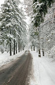 Winter road in snow-covered forest