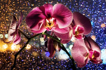Pink orchid on colored background