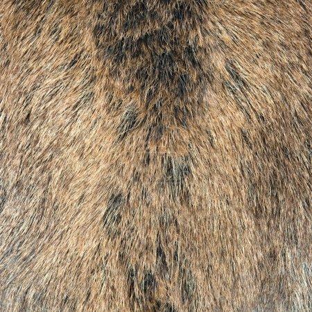 Skin of a wild wild boar