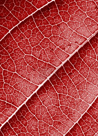 Red leaf background