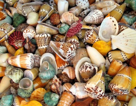 Photo for -- an assortment of exotic shells makes a nice background - Royalty Free Image