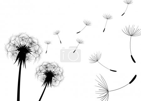 Illustration for Blow Dandelions on white background. - Royalty Free Image