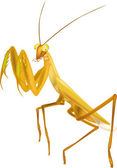 Insect praying mantis animals antenna