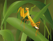 Insect praying mantis in a grass