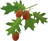 Listy dubu a žaludy