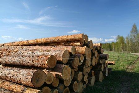 Photo pour Il y a des arbres abattus sur une prairie sous un ciel dégagé - image libre de droit