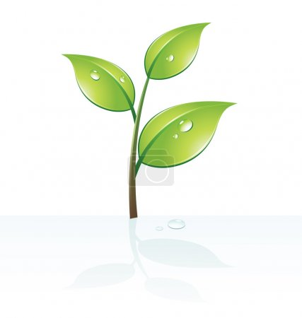 Green leafs