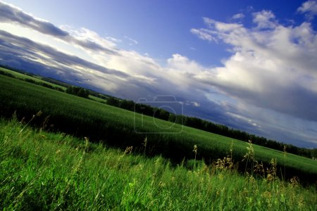 Photo for Green field and blue sky beautiful - Royalty Free Image