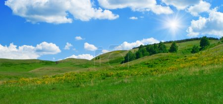 Photo for Summer landscape. Trees on hills of the Ural mountains - Royalty Free Image