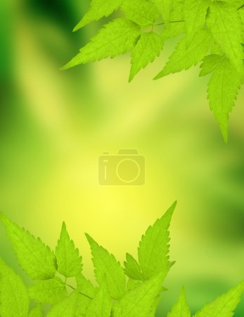 Photo for Spring background with green leaves - Royalty Free Image