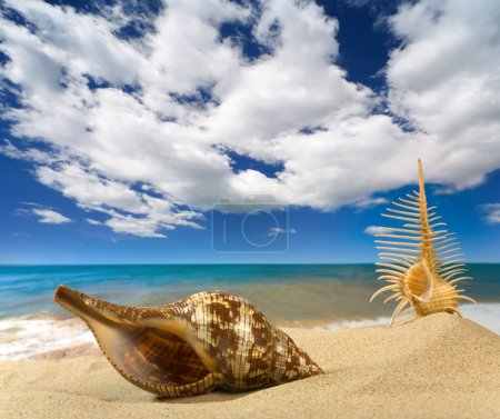 Photo for Landscape with seashell on sky background - Royalty Free Image
