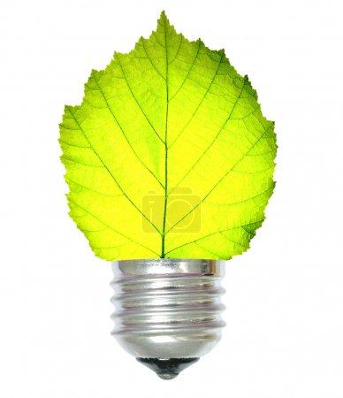 Foto de Concepto de energía verde sobre blanco - Imagen libre de derechos
