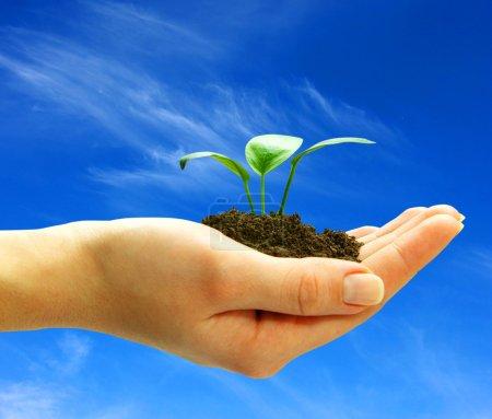 Photo pour Tenant une plante entre les mains sur le ciel - image libre de droit