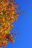 Tree in fall autumn