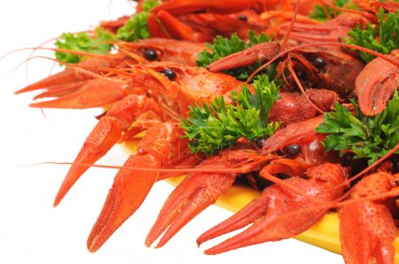 Boiled crayfishes on a dish with parsley and dill...