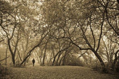 Allein im Wald.