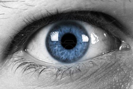 Photo pour Œil humain avec pupille bleue - image libre de droit