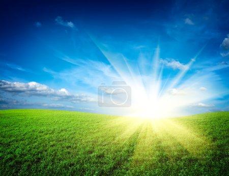 Sunset sun on meadow