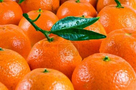Photo pour Mandarines pour le fond - image libre de droit