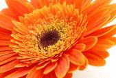 Detailní záběr na krásné květiny