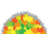 Heap from maple leaves on the white background