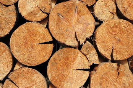 Photo pour Industrie forestière d'abattage d'arbres et l'abattage du bois - image libre de droit