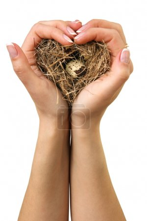 Bird nest in hands. (isolated)