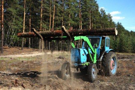 Photo pour Chargement des billes d'arbres dans la forêt, fond - image libre de droit