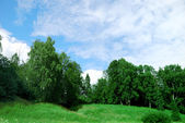 Landscape of a green field with trees an