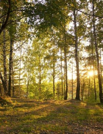 Sunshine in Autumn Forest