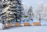 Benchs in snow winter park