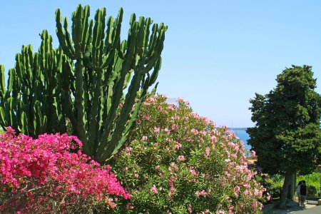 Flowers in Cannes