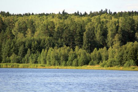 Forest near lake