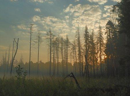 Photo pour Brouillard dans la forêt au début de la matinée - image libre de droit