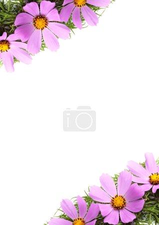 Photo pour Fleurs à pétales isolés sur fond blanc - image libre de droit