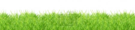 Photo for Isolated green grass on a white background - Royalty Free Image