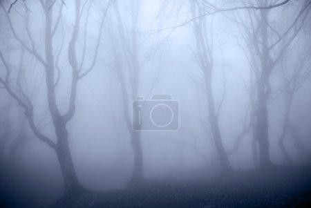 Photo pour Forêt bleue - image libre de droit