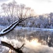 Winter river with a tree standing alone...