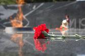 Carnations at eternal fire