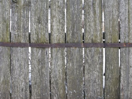 Old mossy wooden fence