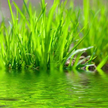 Photo pour Herbe verte sur le fond du ciel - image libre de droit