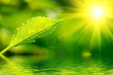 Foto de Hoja verde fresca resaltada en sol. - Imagen libre de derechos