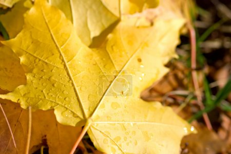 Photo for Autumn leaf - Royalty Free Image