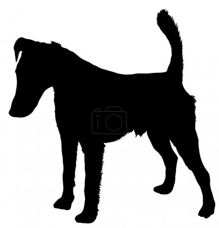 Illustration for Silhouette of a dog of breed smooth fox terrier - Royalty Free Image