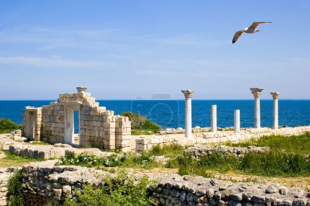 The seagull flying by above Chersonesos
