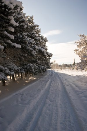 Snow road along a pine pine forest