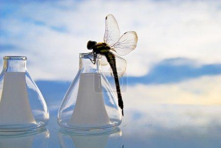 Dragonfly on retort