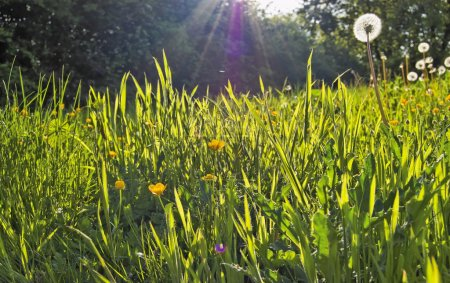 Photo for Sunny meadow - Royalty Free Image