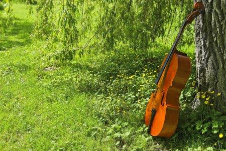 Viola in park