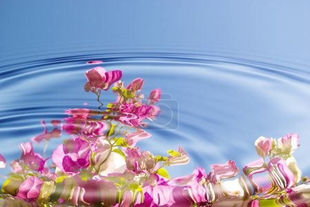 Water ripples with flowers
